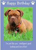 "Dogue de Bordeaux-Happy Birthday - ""I'm Just Like You"" Theme"